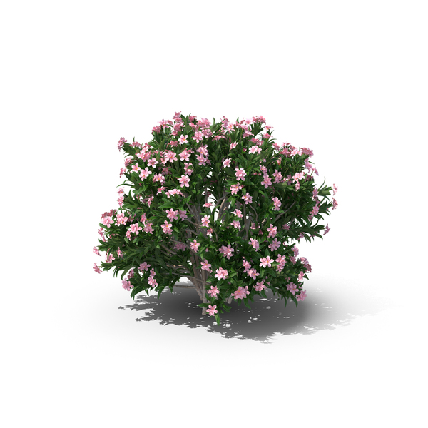 Bush: Little Red Oleander PNG & PSD Images