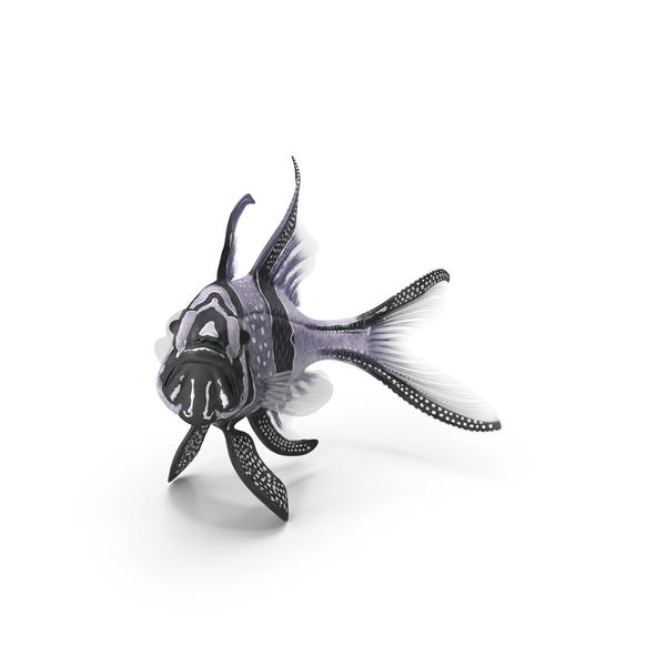 Longfin Cardinalfish PNG & PSD Images