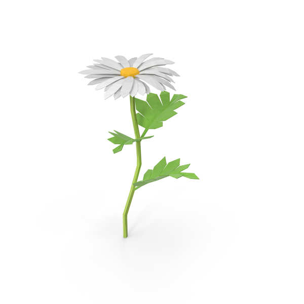 Low Poly Daisy PNG & PSD Images