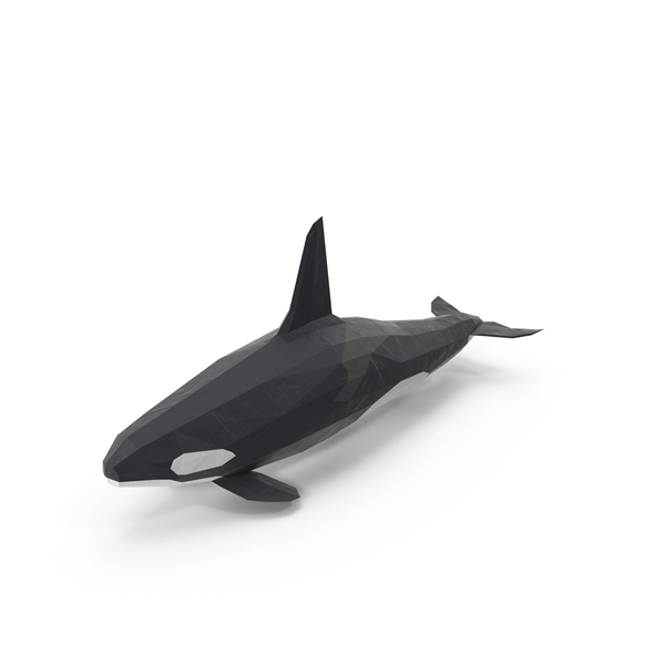 Low Poly Orca Whale Object