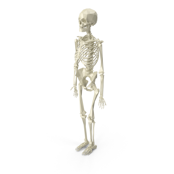 Male: Low Poly Skeleton PNG & PSD Images