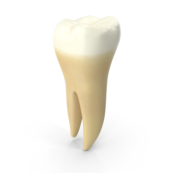 Lower Molar Tooth PNG & PSD Images
