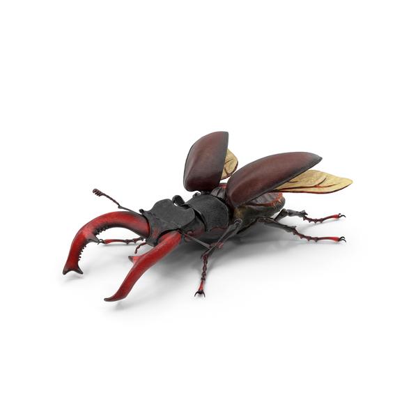Lucanus Cervus Stag Beetle Fur PNG & PSD Images