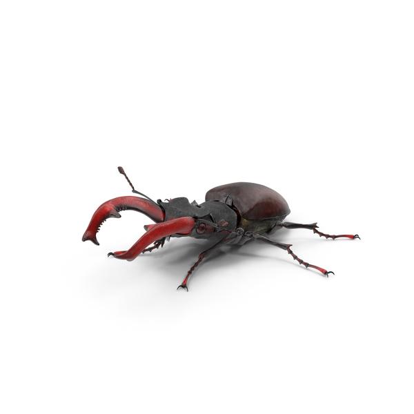 Lucanus Cervus Stag Beetle Walking Pose Fur PNG & PSD Images