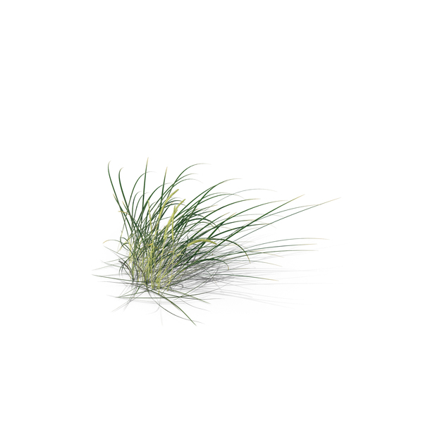 Lyme Grass PNG & PSD Images