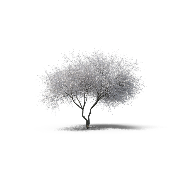 decidious tree png images  u0026 psds for download