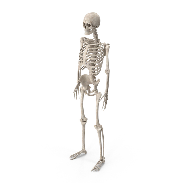 Fighter: Male Skeleton PNG & PSD Images