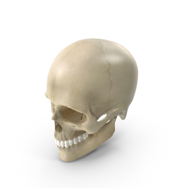 Male Skeleton PNG & PSD Images