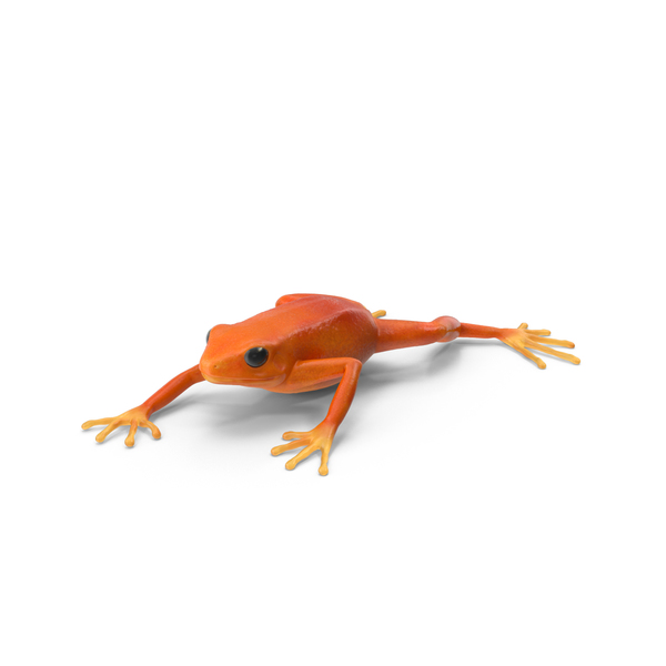 Mantella Frog Object