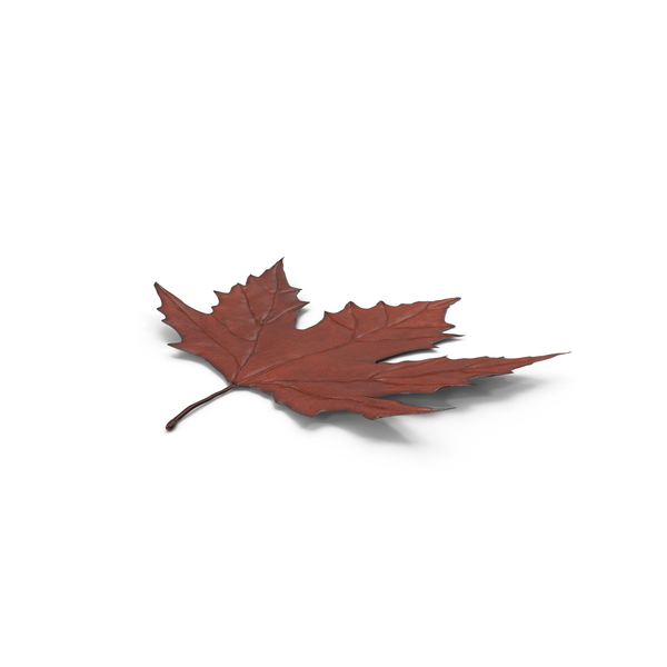 Maple Leaf Object