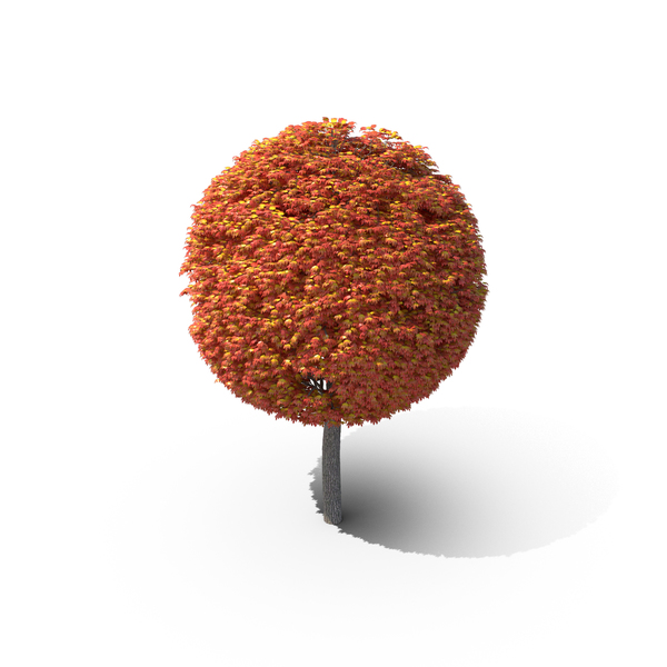Tree PNG Images & PSDs for Download | PixelSquid