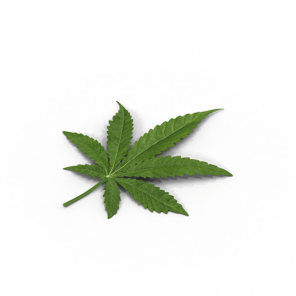 Marijuana Leaf Object