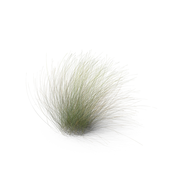 Grasses: Mexican Feathergrass PNG & PSD Images