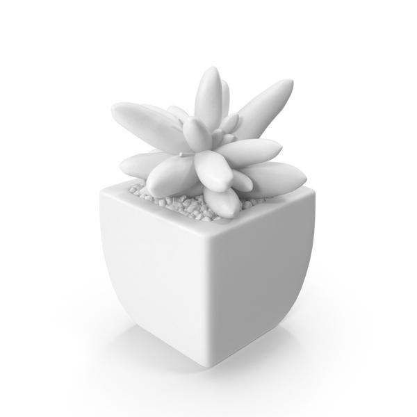 Monochrome Succulent Object