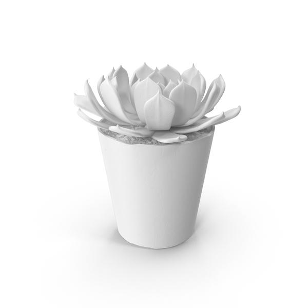 Monochrome Succulent PNG & PSD Images