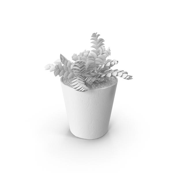 Monochrome Succulents Object