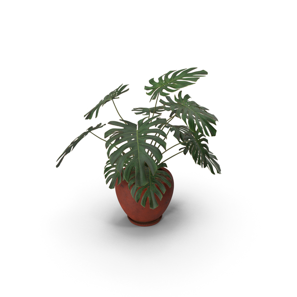 Plant: Monstera Deliciosa With Pot Red PNG & PSD Images