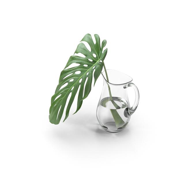 Monstera Leaf PNG & PSD Images