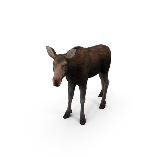 Moose PNG & PSD Images
