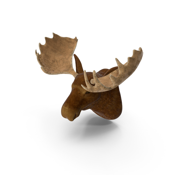 Moose Head Trophy PNG & PSD Images