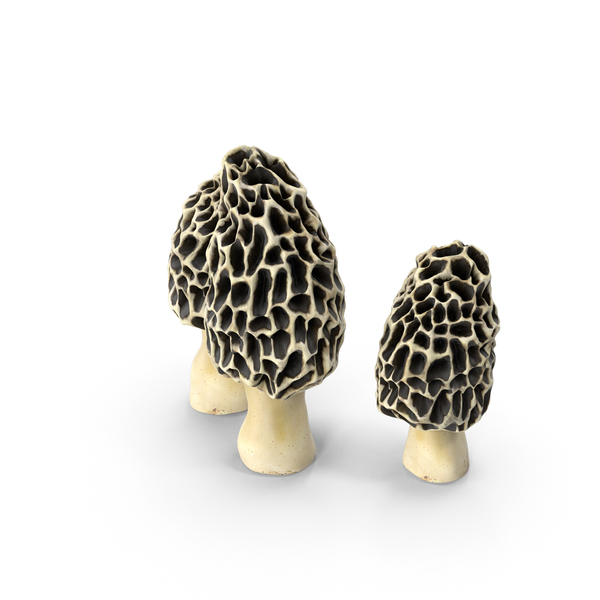 Morel Mushrooms PNG & PSD Images