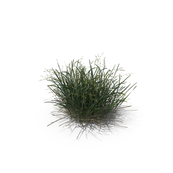 Grasses: Mountain Melick PNG & PSD Images