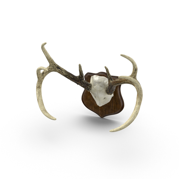 Mounted Antlers PNG & PSD Images