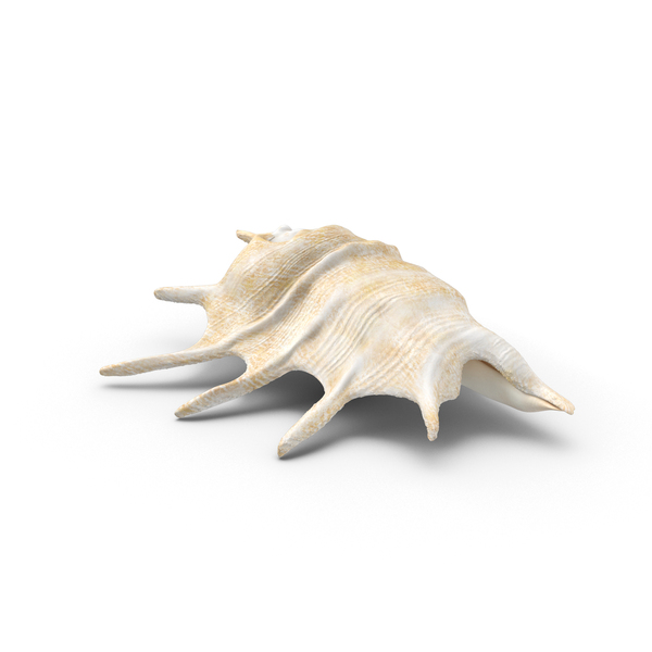 Murex Conch Shell Object