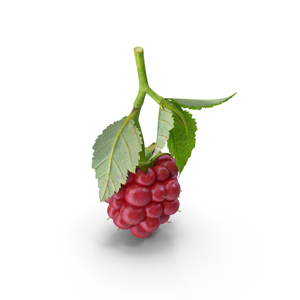 Not Ripe Berry Blackberry with Leaves PNG & PSD Images