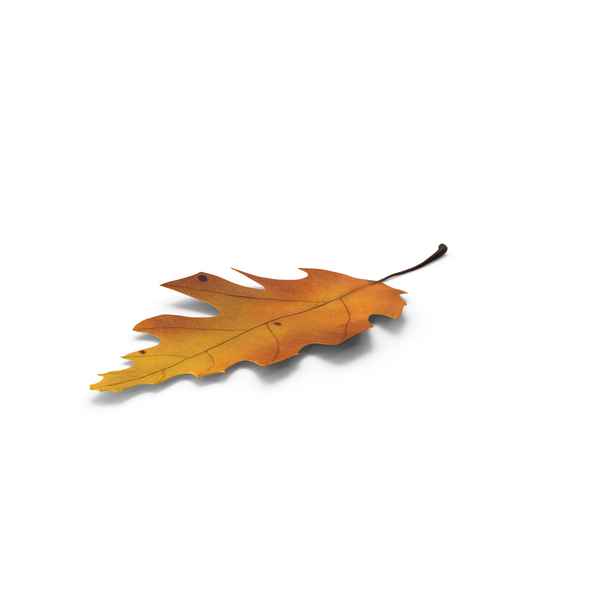 Oak Leaf Object