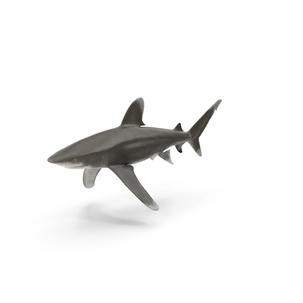 Oceanic Whitetip Shark Object
