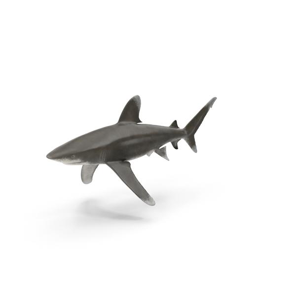 Oceanic Whitetip Shark PNG & PSD Images