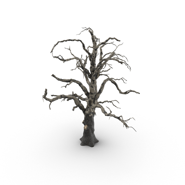 Spooky: Old Dead Tree PNG & PSD Images