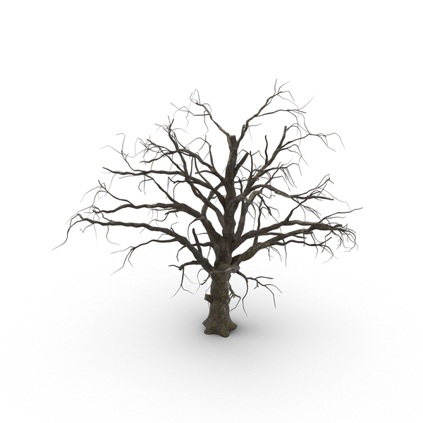 Old Dead Tree PNG & PSD Images