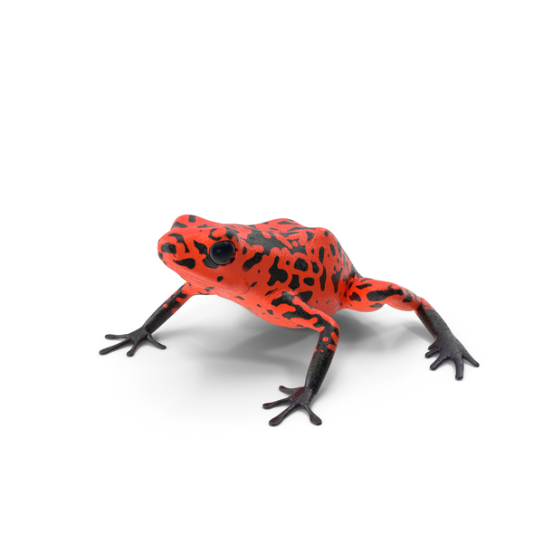 Poison: Orange Black Dart Frog PNG & PSD Images