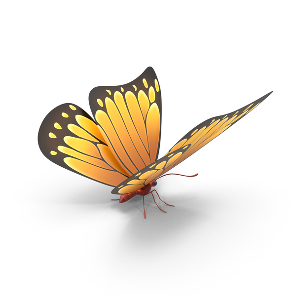 Orange Butterfly PNG & PSD Images