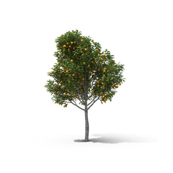 Orange Tree Object