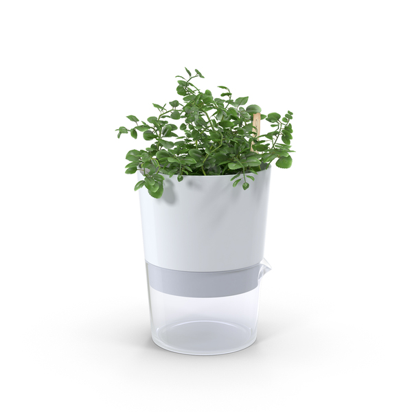Oregano in Pot PNG & PSD Images