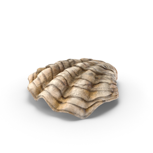 Animal: Oyster Shell PNG & PSD Images