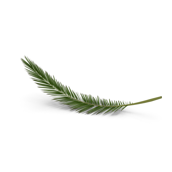 Palm Branch PNG & PSD Images