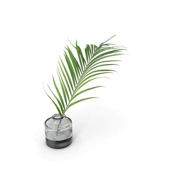 Palm Leaf PNG & PSD Images