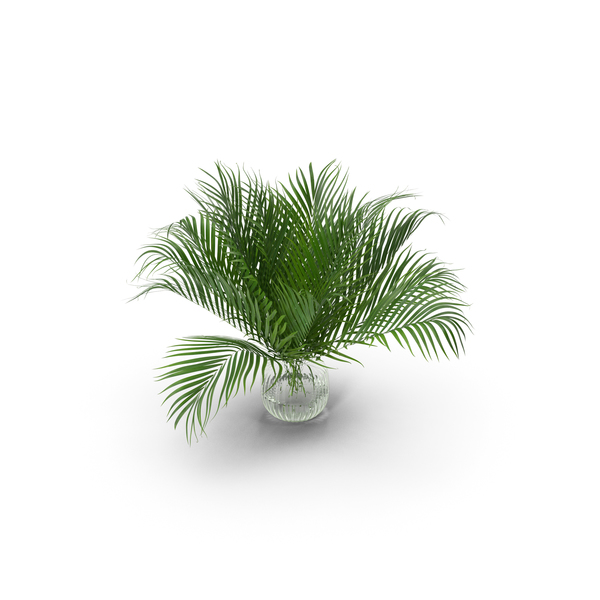 Leaf: Palm Leaves PNG & PSD Images