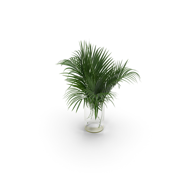Palms: Palm Leaves PNG & PSD Images