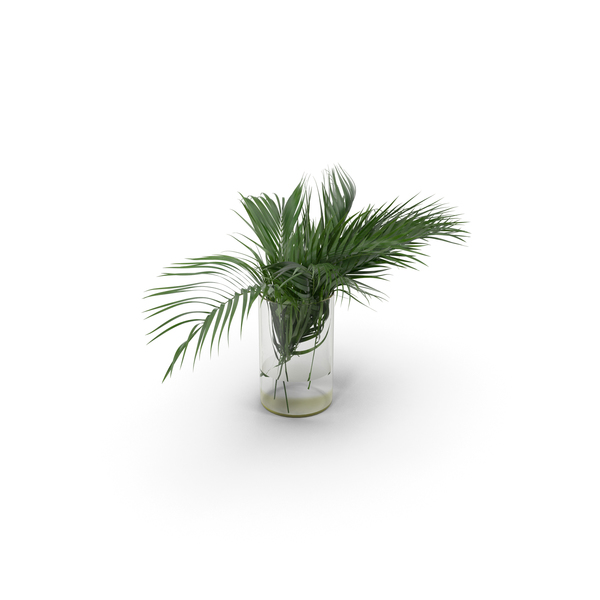 Tree: Palm Leaves PNG & PSD Images