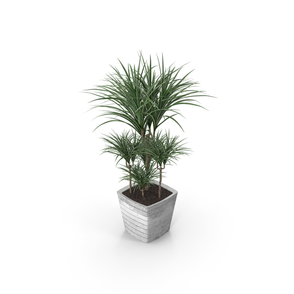 Palm Potted PNG & PSD Images