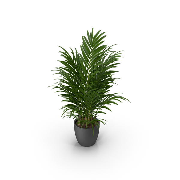 Flower Pot Support: Palm Potted PNG & PSD Images