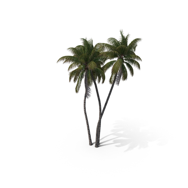 Palm Tree Cocos Nucifera PNG & PSD Images