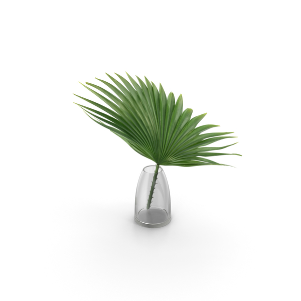 Tree: Palm PNG & PSD Images