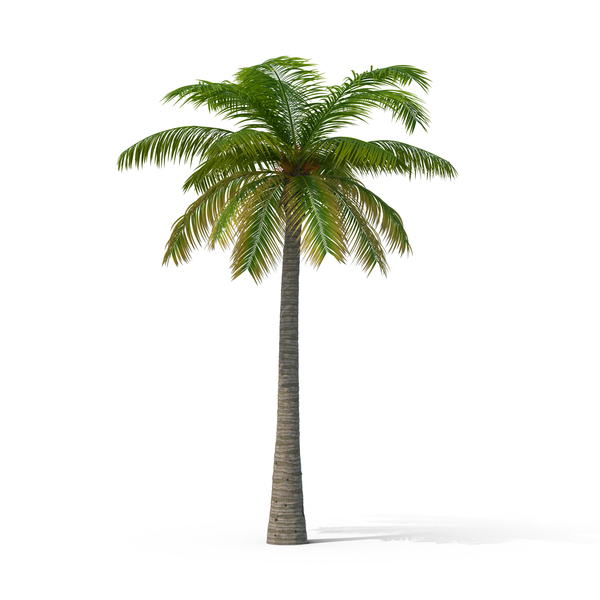 Palm Tree Object