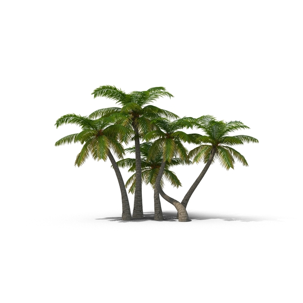 Palm Trees Object